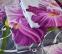 Постельное бельё ТМ ТЕП RestLine 3D Фуксия 151 Евростандарт 1